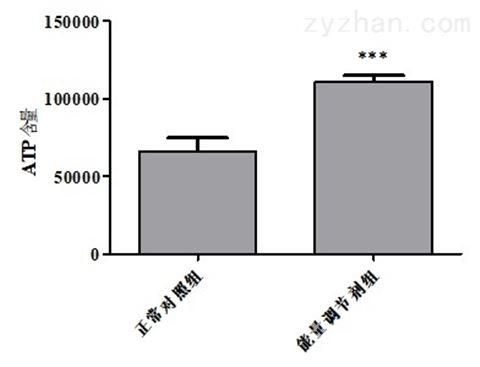 利用斑马鱼模型筛选减肥产品能量调节剂